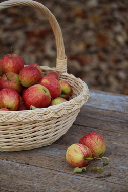 A basket of apples on a picnic table